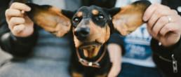 dachshund nani annette dog fine art
