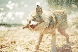 ravistelu koirakuvaaja koirakuvaus naniannette
