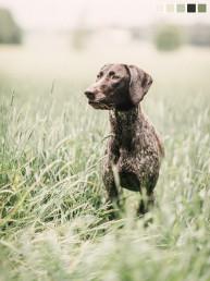 saksanseisoja naniannette koirakuvaaja turku finland dog photographer