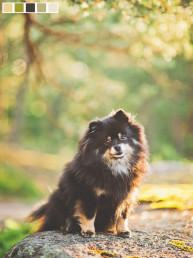 koirakuvaus koirakuvaaja nani annette dog photographer