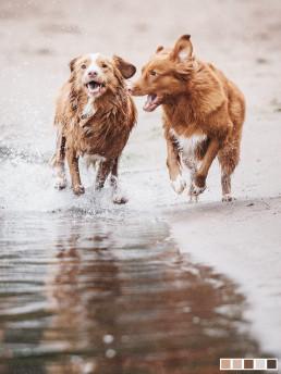 koirakuvaaja dog photography koirakuvaus helsinki ranta vesi uintikuva nani
