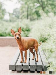 helsinki koirakuvaus keskusta kuvauspäivä dog photographer nani
