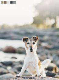 koirakuvaus koirakuvaaja dog photographer kettuterrieri nani suomenlinna